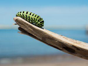 caterpillar-1209834_1920